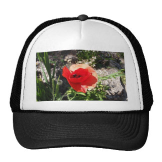 Red Poppy Mesh Hat