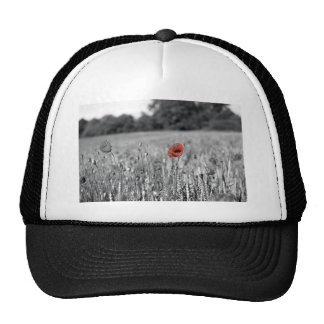 red poppy in a black and white field mesh hats
