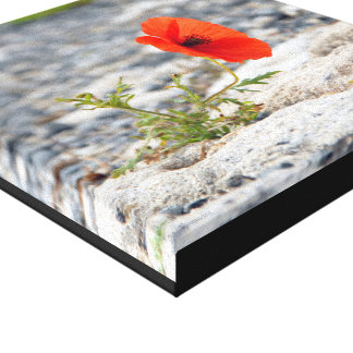 Red poppy in pavement square canvas