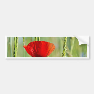 Red poppy in the corn field. bumper sticker
