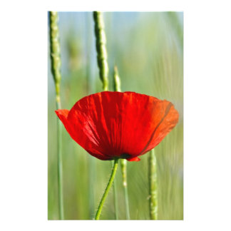 Red poppy in the corn field stationery
