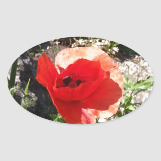 Red Poppy Oval Sticker