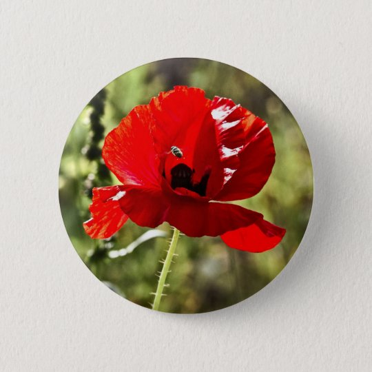 Red poppy (papaver rhoeas) button