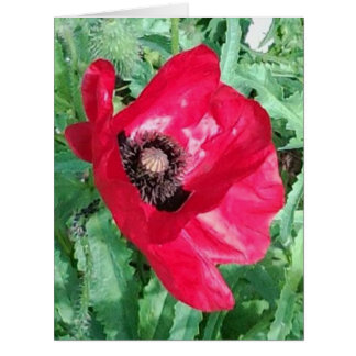 Red Poppy Photo BIG Card & Insp photo/words rear