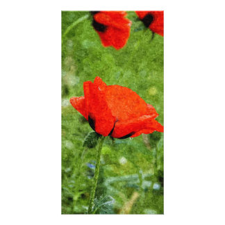 Red Poppy Photo Cards