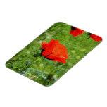 Red Poppy Rectangle Magnet