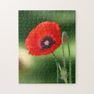 Red Poppy Seed 10x14 Photo Puzzle