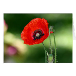 Red Poppy Seed Greeting Card