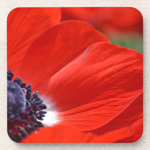 Red Poppy Spring Floral Drink Coasters
