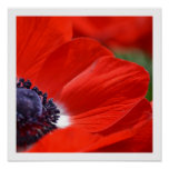 Red Poppy Spring Floral Print