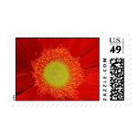 Red Postage Stamps