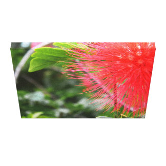 Red powder puff canvas print