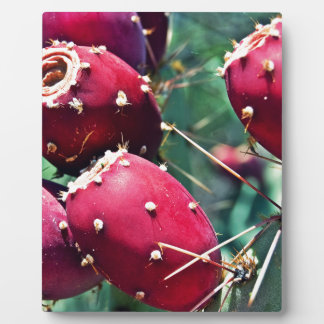 Red Prickly Pear Plaque