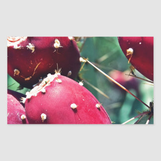 Red Prickly Pear Rectangular Sticker