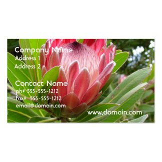 Red Protea Business Card Templates