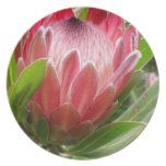 Red Protea Dinner Plates