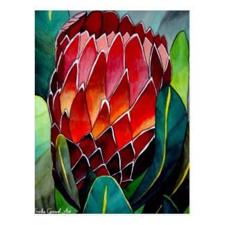 Red Protea flower original watercolour art Postcard