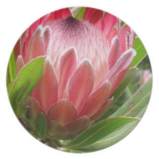 Red Protea Melamine Plate