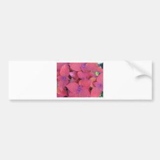 Red Purple Coleus Leaves Car Bumper Sticker