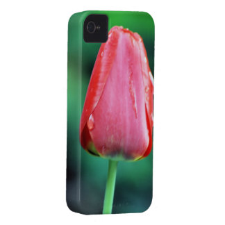 Red Rain Tulip Photography iPhone 4 Cover