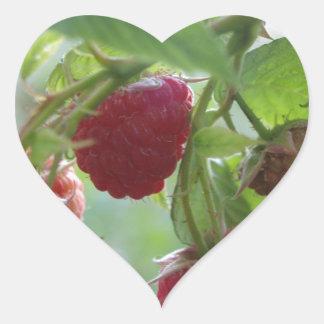 Red Rasberries Heart Sticker