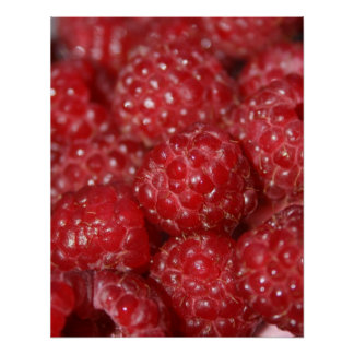 Red Raspberries close up photograph Poster
