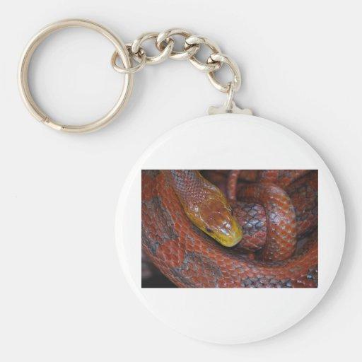 Red Rat Snake Basic Round Button Keychain