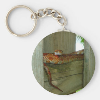 red rat snake in fence head up basic round button keychain