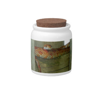 red rat snake in fence head up candy dish