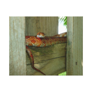 red rat snake in fence head up canvas print
