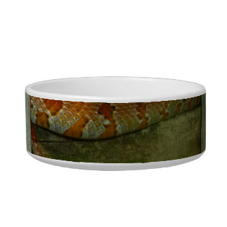red rat snake in fence head up cat food bowls