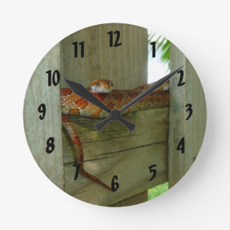 red rat snake in fence head up round clock