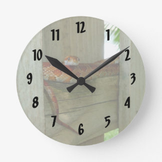 red rat snake in fence head up wall clocks