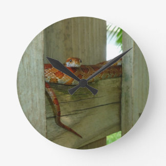 red rat snake in fence head up round clocks