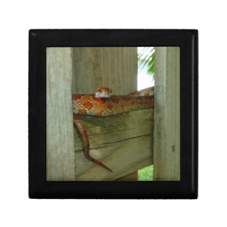 red rat snake in fence head up jewelry box