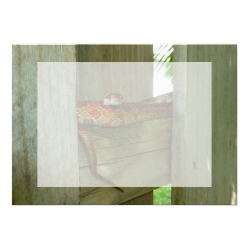 red rat snake in fence head up personalized invitation