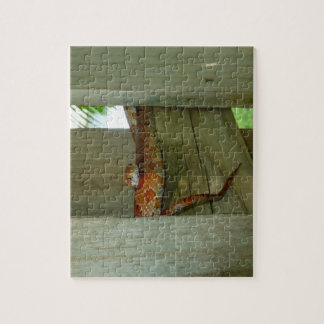 red rat snake in fence head up jigsaw puzzle