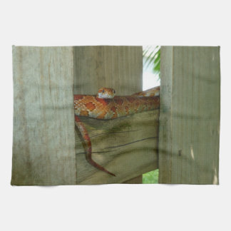 red rat snake in fence head up towels