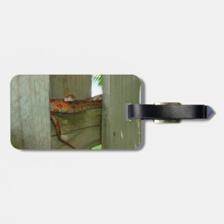 red rat snake in fence head up luggage tag
