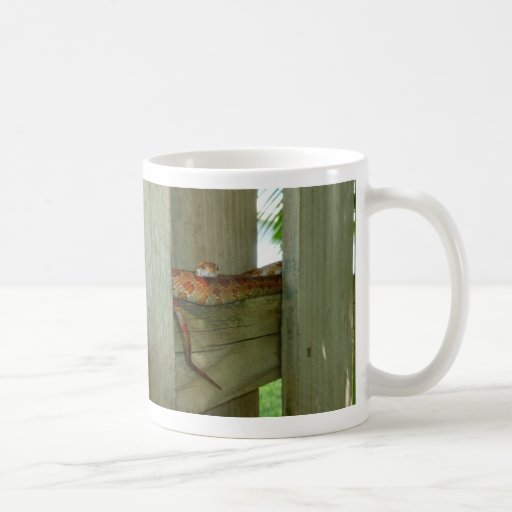 red rat snake in fence head up mugs