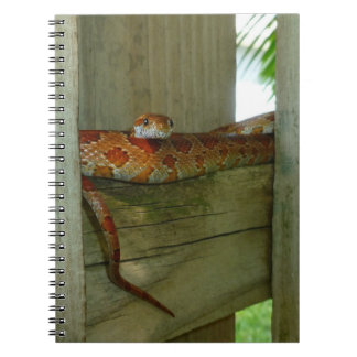 red rat snake in fence head up spiral notebooks
