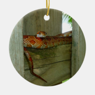 red rat snake in fence head up ornament