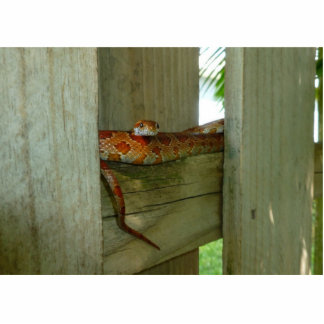 red rat snake in fence head up photo sculpture