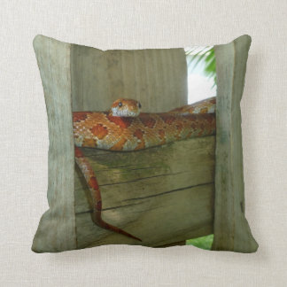 red rat snake in fence head up pillow