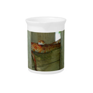 red rat snake in fence head up drink pitcher
