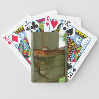 red rat snake in fence head up bicycle playing cards