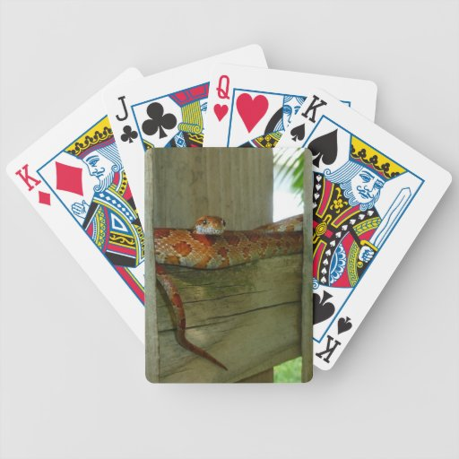 red rat snake in fence head up poker deck
