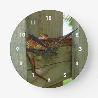 red rat snake in fence head up round wall clocks