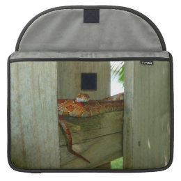 red rat snake in fence head up sleeve for MacBooks