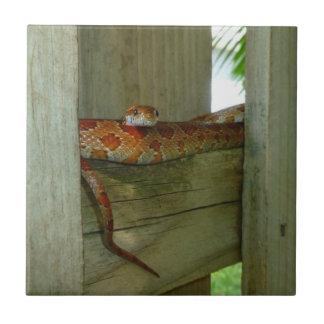 red rat snake in fence head up tile